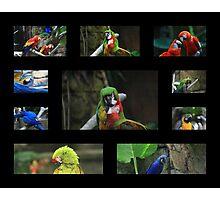 Collage Photographic Print