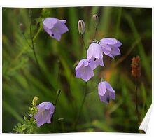 Harebells, Manfield Scar, River Tees, England Poster