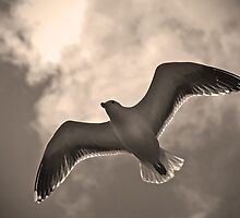 Seagull in sepia by Esther  Moliné