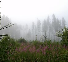 Field, forest and mist by Antanas