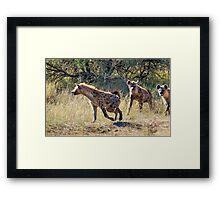 HYAENA ON THE HUNT - Spotted Hyaena - Crocuta crocuta Framed Print