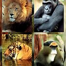 Lions And Tigers And Primates, Oh My! by SuddenJim