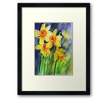 Splashy Daffs Framed Print