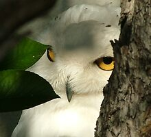 I can see you! by Martina Fagan