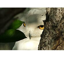 I can see you! Photographic Print