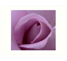 Mauve Rose Bud. Art Print