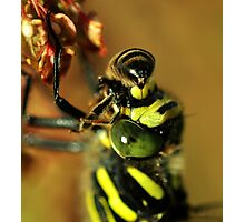 You wont sting me  Photographic Print