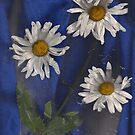 Denim and Daisies Three by linmarie