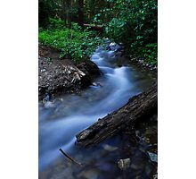 Deep in the forest Photographic Print
