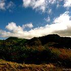 Oregon by maggiebarra