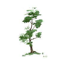 Little Zen Tree 300 Photographic Print