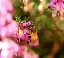 Bee in Bokeh II by jayneeldred
