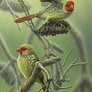 Star Finches by Christopher Pope