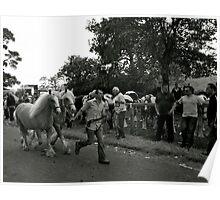 Palamino Ponies At Appleby Fair. Poster