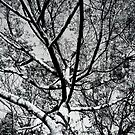 Branches by MSPhoto