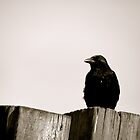 Raven - North Shields Quayside by Jack Taylor