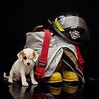 Rescued by Renee Dawson