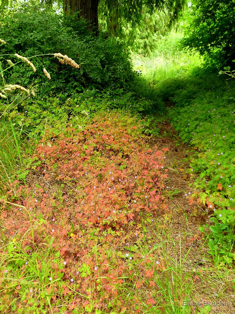 Fragrant Pathway Through the Forest by Elaine Bawden