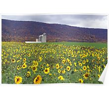Blue Mountian and Sunflowers Poster