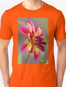 dahlia in garden T-Shirt