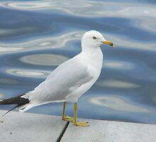 Seagul By The Lake by VixenFirepaw