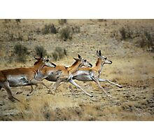 Antelope Wild and Free ~ Sierra Co, New Mexico Photographic Print