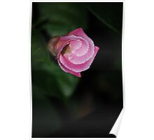Folds of Nature Poster