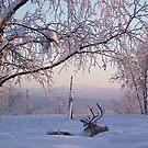 Reindeer at Dawn by Honor Kyne