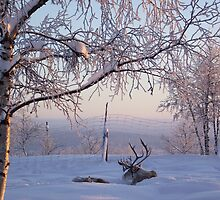 Reindeer at Dawn by Honor Kyne