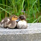 """""""Can You Keep a Secret...I Think You're Just Ducky""""! by Carol Clifford"""