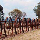 Wheels Wheels Wheels - New South Wales by Bev Pascoe