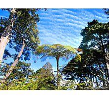 Nature Mimics Itself Photographic Print