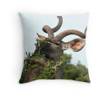 Kudu eating - Addo Elephant Park - South Africa Throw Pillow