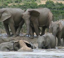 Lean on me - Elephants taking a bath by franticfish