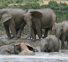 Lean on me - Elephants taking a bath by franticfish