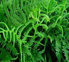 Green Curls by Debbie Robbins