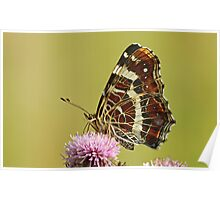 The Map Butterfly Poster