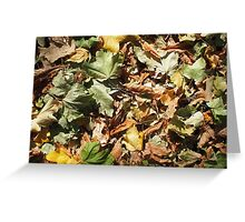 Background of green, yellow and brown maple fallen leaves Greeting Card