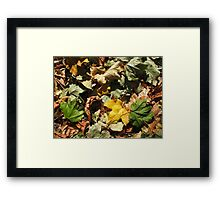 Top view of the green, yellow and brown maple fallen leaves Framed Print