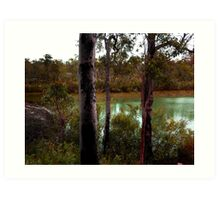 DMC-TZ7 - Dwellingup Bushland, Western Australia. Art Print