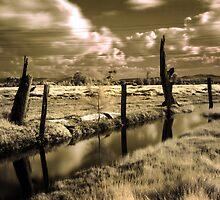 Ash Island by Nichole Lea