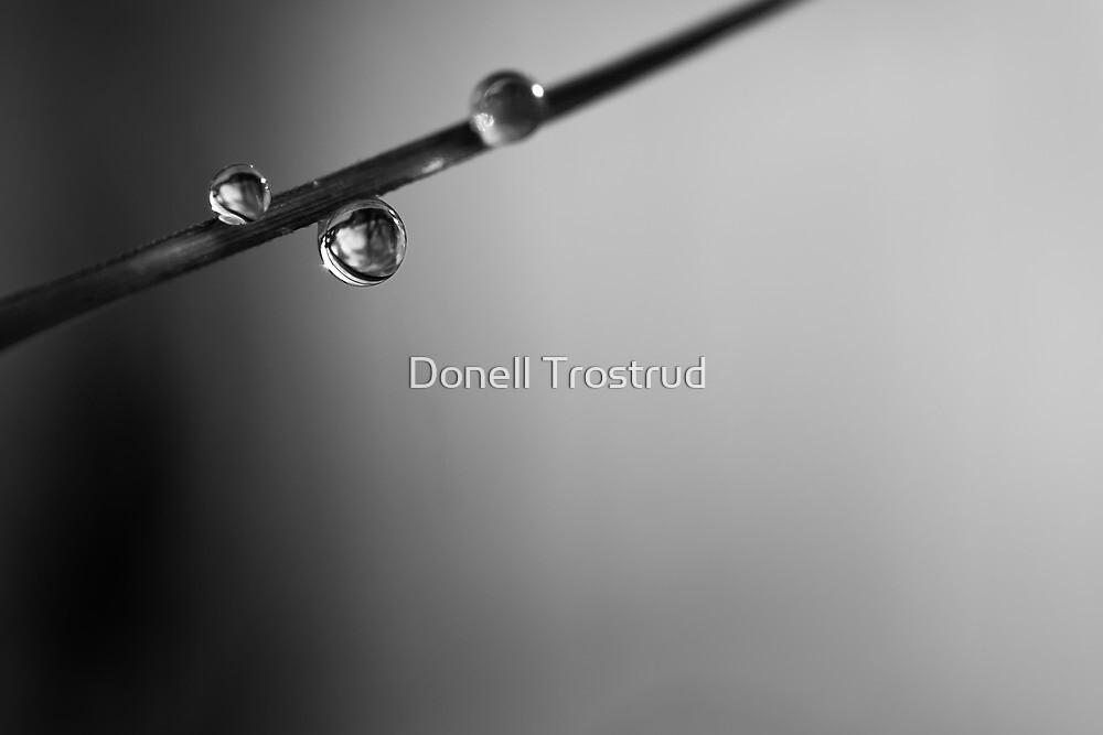 Diamond Dew Drops by Donell Trostrud