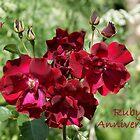 Ruby Anniversary by Sally J Hunter