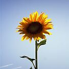 Giant Sunflower by down23