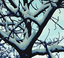Snow branches by Sorted3000