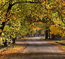 Autumn Leaves - Hill End, NSW Australia - The HDR Experience by Philip Johnson