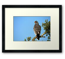 Who?.. Me? Framed Print