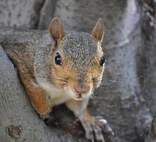 """Social Squirrel""-Washington, D.C. by Jamie Tindell"