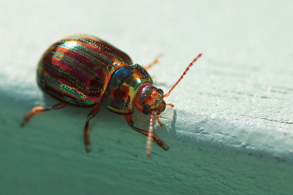 The Metallic Rosemary Beetle by Simon Hills