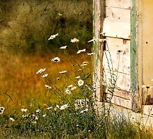 Vintage Daisies by Renee Dawson